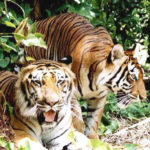 Golden Triangle and Wild Life